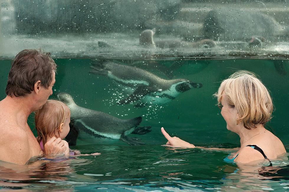 Schwimmen mit Pinguinen im Spreeweltenbad Lübbenau, Foto: Archiv Spreewelten GmbH